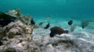Multiple Habitants of Coral Reef video