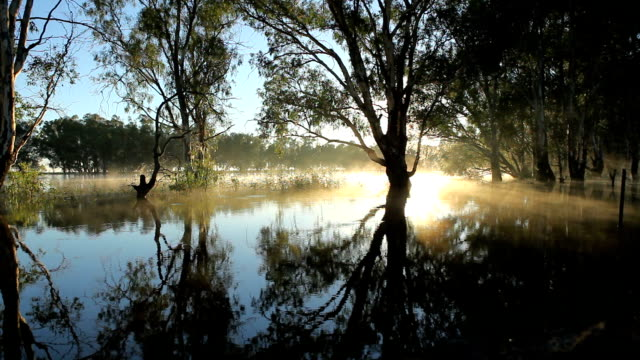 Murray River Barmah Forest in Flood Australia video