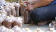 Mushroom cultivation video
