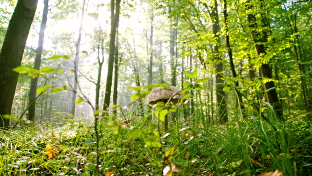 LS Mushroom In The Forest video