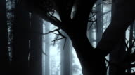 HD mystic forrest video