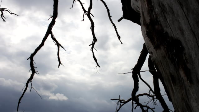 Mystical fairytale atmosphere. Cloudy sky with a dead dead tree. The camera moves on the slider. The tree died from lack of water. Climate change. Eerie atmosphere. The curves of lifeless branches of trees are intertwined. Result of human life video