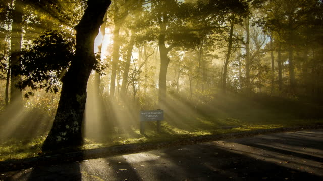 Mystical Fog through Trees at a Blue Ridge Parkway Overlook video
