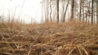 Mystical Glade in Fog, Dramatic Autumn video