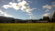 Napa Valley HDR Mustard Season Timelapse video