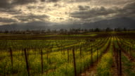 Napa Valley Mustard Epic HDR Timelapse video