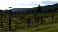 Napa Valley spring nature video