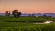 Napa Vineyard at Sunset - Time Lapse video