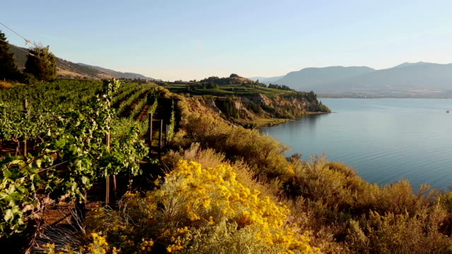 Naramata Bench Penticton Okanagan Valley Vineyard video