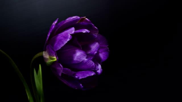 natrure purple flower video