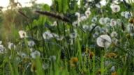 Natural Landscape video
