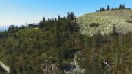 Natural Regenerating Coniferous Forest video