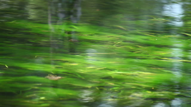 Natural Spring Flows video