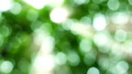 Natural video background.nature green bokeh sunlight backgrounds. video