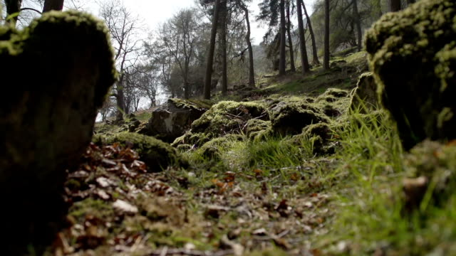 A Naturally Beautiful Ancient Woodland video