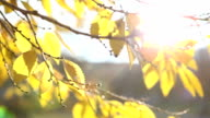 Nature background in Autumn video