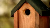 HD Nature Birdhouse and bird with sound video