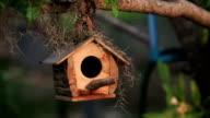 HD Nature Birdhouse video