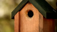HD Nature Birdhouse with Bird Sounds video