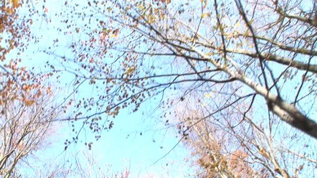 HD: Nature in autumn video