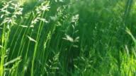 Nature long grass           NA  BA video