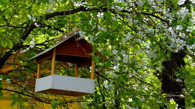 'Nature': Rack for birds, in the lush garden. video
