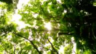 Nature Scenic Landscape. video
