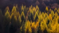 Nature themed background of colorful trees in autumn video