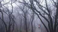 nature trail in Huangshan (Yellow Mountains), Eastern China. video