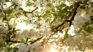 nature tree light bee video