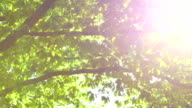 Nature - Trees against the Sun with Optical Flares video