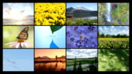 Nature's beauty, Video Montage video