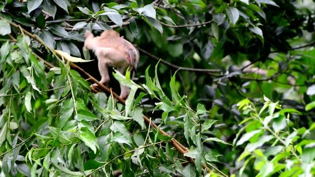 Naughty childhood monkey jumping on tree. video