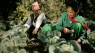 Nepalese farmer couple in their farm. video