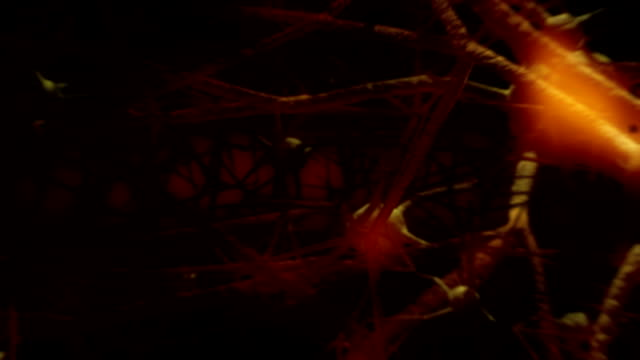 Nerve Cell Fly Through video