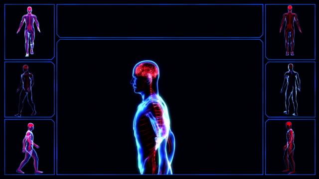 Nervous system video
