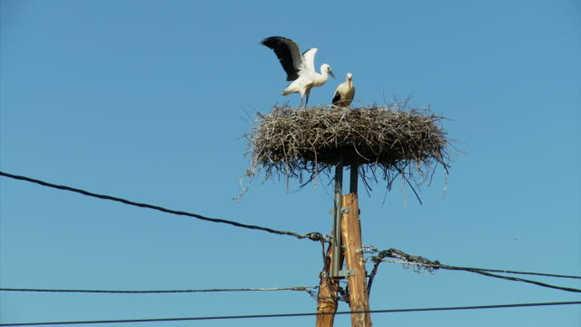HD: Nest Of Storks video