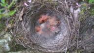 nest video