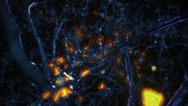 Neuron cells. Network connections. Brain. Medical background. Blue. video
