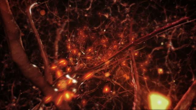 Neuron cells. Network connections. Orange. Synapse. Brain. video