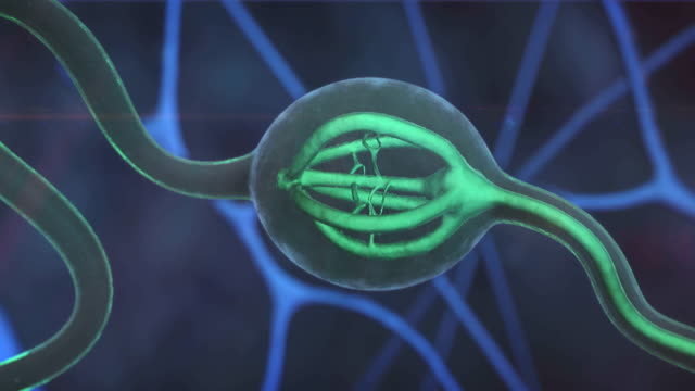 Neuron, nerve cell video