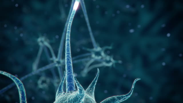 Neuron network video