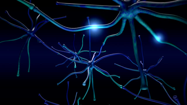 Neuron signals video