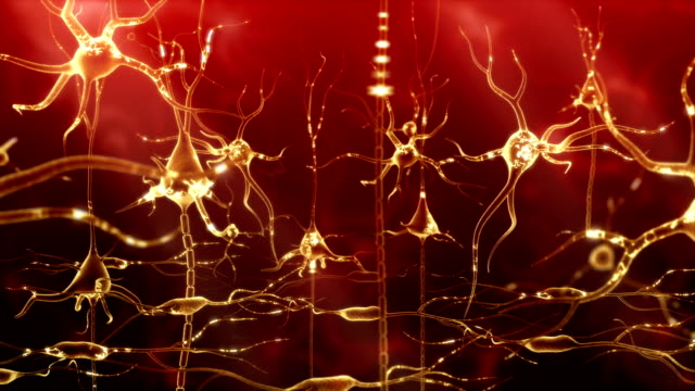 Neuronal Activity Female Red video