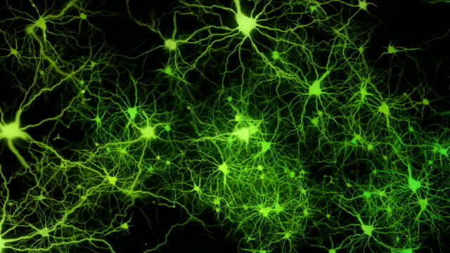 Neuronal activity video