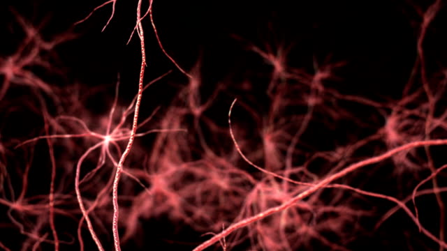 Neurone synapse network.  3D animation. video