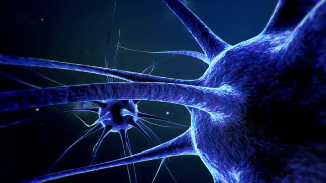 Neurons nerve cells transmit information video