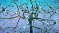 Neurons video