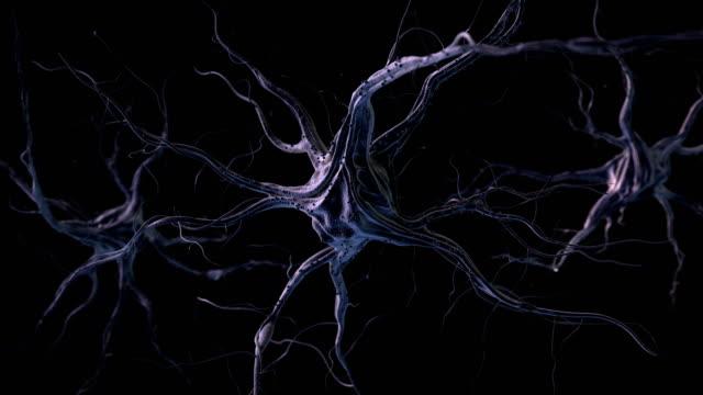 Neurons video