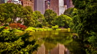 New York. Central Park video